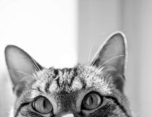 15 formas de hacer feliz a tu gato