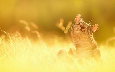 Lo más importante para un gato es respetar su propia naturaleza