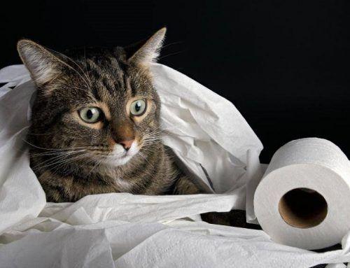 S.O.S.: Mi gato orina fuera de la bandeja