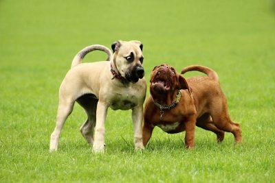 Comunicación Canina