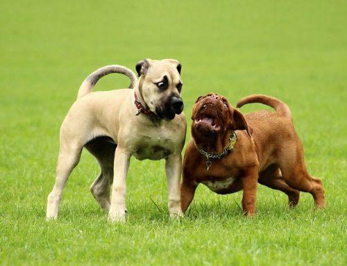 Qué debes saber sobre comunicación canina