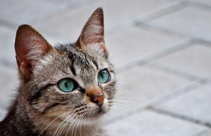 gato1 700x450