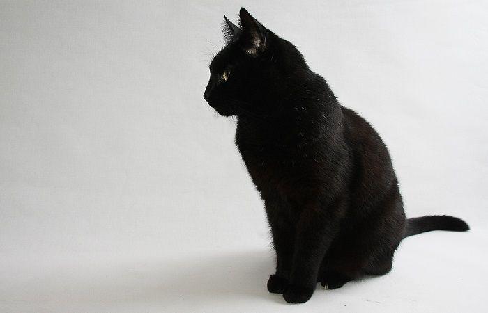 gato2 700x450