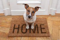 Ideas para entretener a tu perro en casa