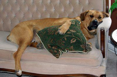 ¿Tu perro se aburre en casa?