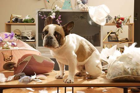 El aburrimiento puede ser causa de problemas en casa