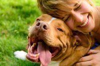Como mejorar el vínculo con tu perro