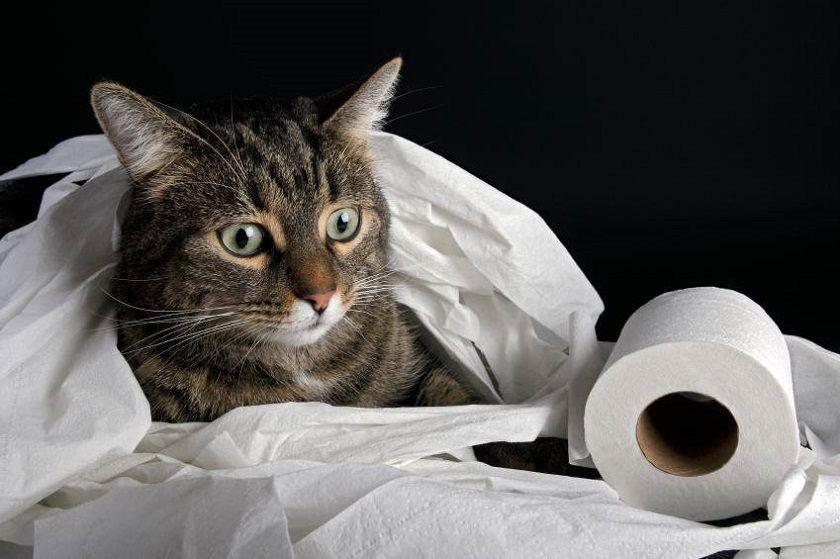Mi gato norina fuera del arenero