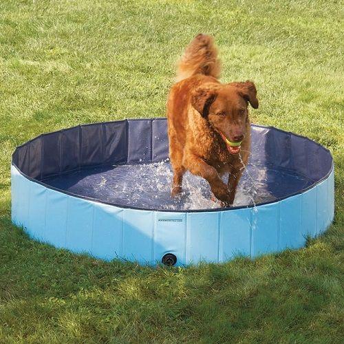 piscina para perros