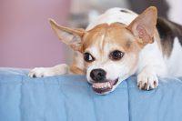 Entender al perro evitar mordeduras a niños