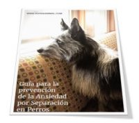 Guía para la prevención de la ansiedad por separación en perros
