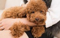 perro velcro y ansiedad por separación