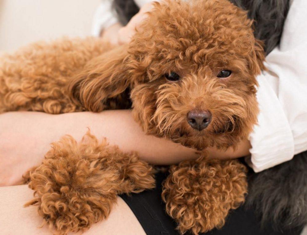 El perro velcro y la ansiedad por separación