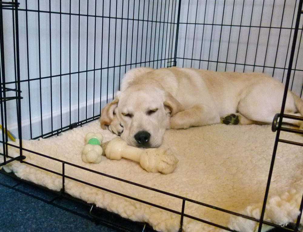¿Son buenas las jaulas para perros?