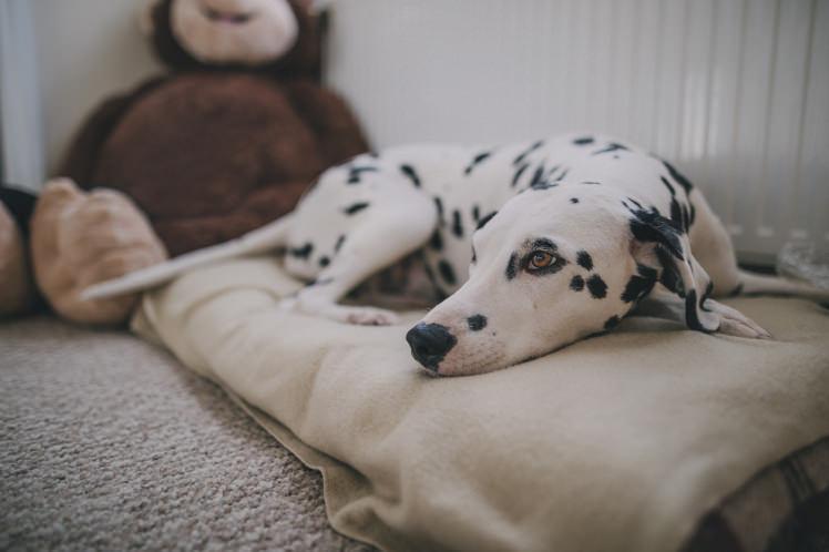 nuevo perro llega a casa