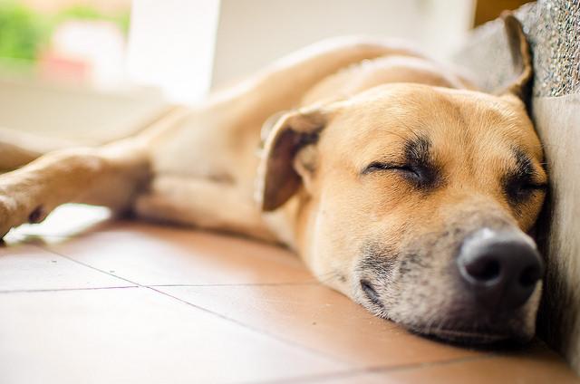 nuevo perro adoptado llega a casa