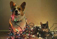 Propósitos de año nuevo para perros y gatos (y sus humanos)