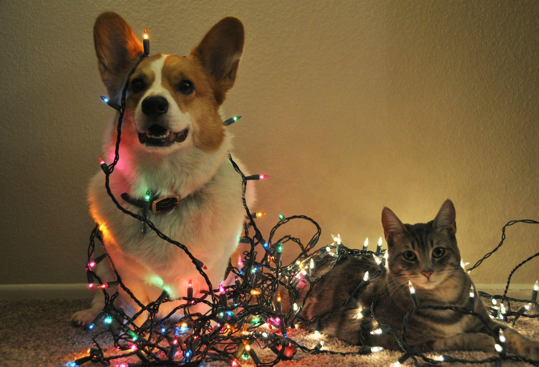 Prop sitos de a o nuevo para perros y gatos y sus humanos