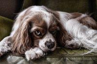 consecuencias de la ansiedad por separación