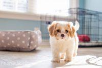 nuevo cachorro llega a casa