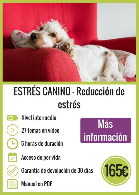 Curso Online Reducción de estrés canino