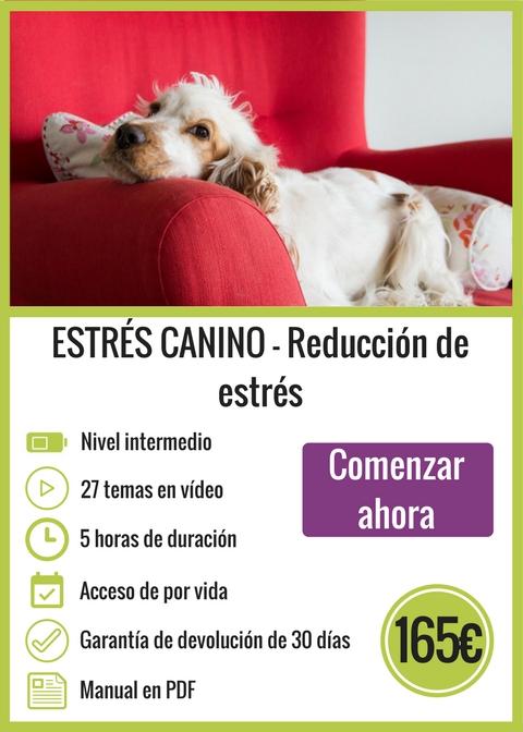 Curso Online Reducción Estrés Canino