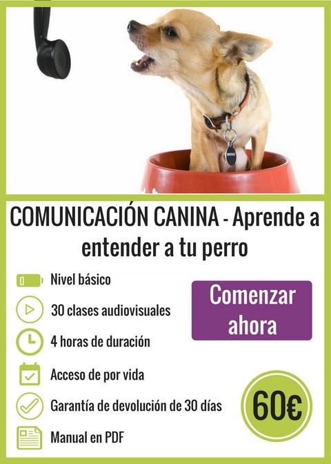 Comunicación Canina - Aprende a entender a tu perro