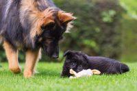 el deber de socializar al perro
