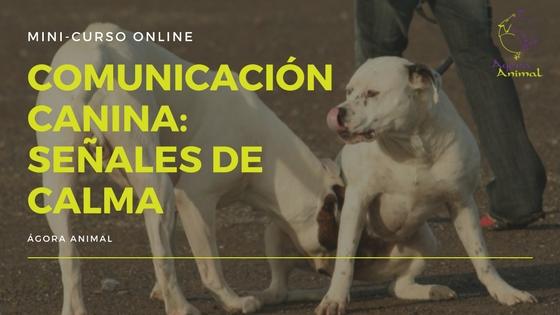 Comunicación Canina Señales de Calma