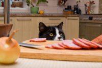 alimentación gato